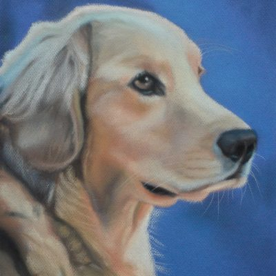 TE KOOP, Retriever, mei 2019